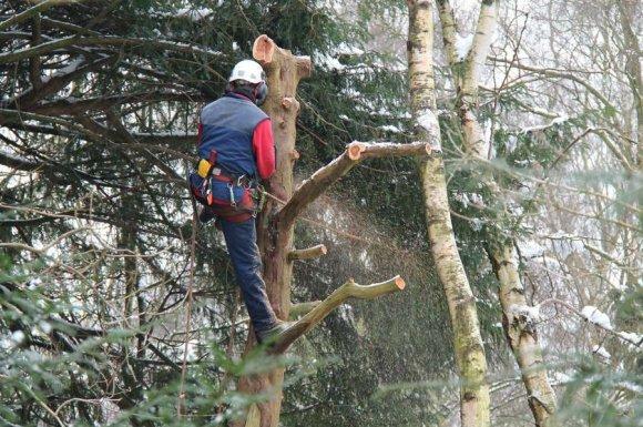Entreprise professionnelle pour l'abattage et l'élagage d'arbre chez un particulier