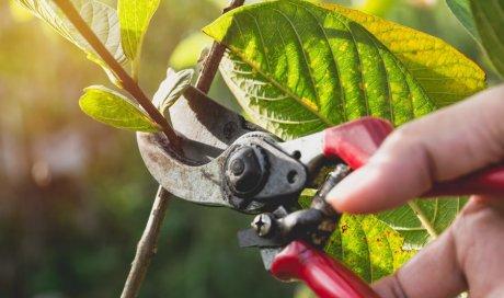 Réduction d'impôt pour travaux de jardinage