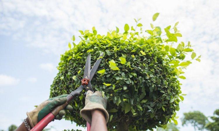 Jardipaysage Saint-Jean-le-Vieux - entreprise d'entretien d'espaces verts